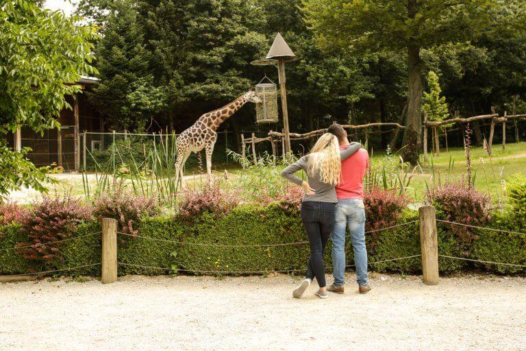 opazovanje žirafe _75A0661